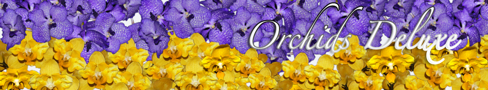 Orchids Deluxe
